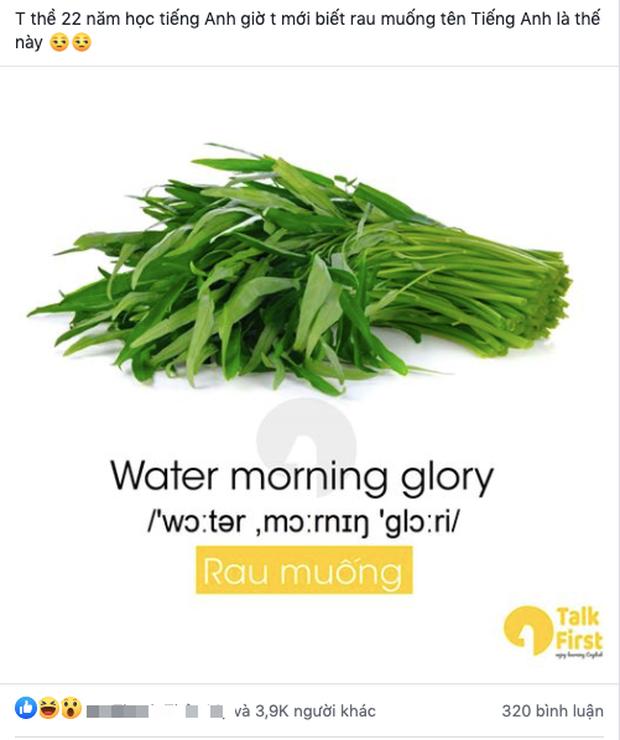 """Một loại rau rất phổ biến ở Việt Nam có tên tiếng Anh cực kỳ """"hack não"""", đọc xong ai cũng tự hỏi liên quan chỗ nào? - Ảnh 1."""