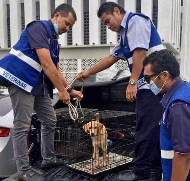 Phẫn nộ cảnh tượng người đàn ông độc ác kéo lê chú chó con trên đường cùng bản án trăm triệu làm nức lòng dân mạng - Ảnh 2.
