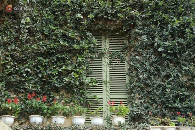 Ảnh: Ngắm ngôi biệt thự 3 tầng phủ kín dây leo chằng chịt ở Hà Nội - Ảnh 4.