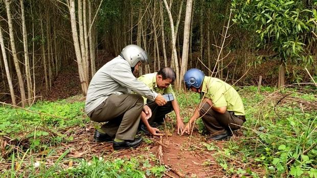 Tìm thấy dấu chân chó ở khu vực nghi có 2 con báo đen khoảng 100kg xuất hiện ở Đồng Nai - Ảnh 1.