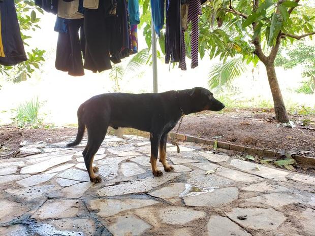 Tìm thấy dấu chân chó ở khu vực nghi có 2 con báo đen khoảng 100kg xuất hiện ở Đồng Nai - Ảnh 2.