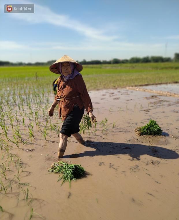 """Cụ bà gần 90 tuổi ở Hà Nội hàng ngày đi cấy, đan lưới làm thú vui tao nhã: """"Các cháu chưa chắc đã khoẻ bằng tôi"""" - Ảnh 6."""
