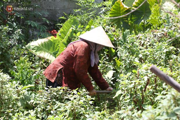 """Cụ bà gần 90 tuổi ở Hà Nội hàng ngày đi cấy, đan lưới làm thú vui tao nhã: """"Các cháu chưa chắc đã khoẻ bằng tôi"""" - Ảnh 2."""