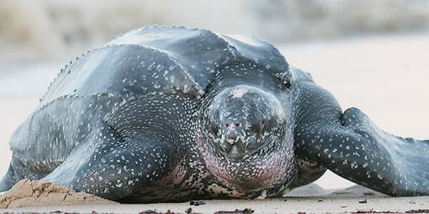 Mua rồi quên mất không ăn, túi trứng nở ra đàn rùa cực xinh nhưng đằng sau là một vấn đề khiến nhiều người cảm thấy nhói đau - Ảnh 4.