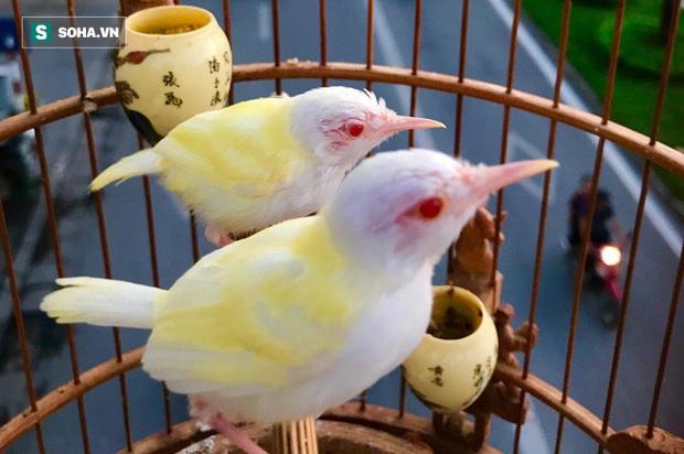 Độc nhất tại Việt Nam: 72 con chim quý tộc trị giá 10 tỷ đồng, có 2 bảo mẫu riêng chăm sóc - Ảnh 2.