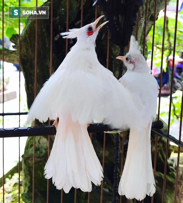 Độc nhất tại Việt Nam: 72 con chim quý tộc trị giá 10 tỷ đồng, có 2 bảo mẫu riêng chăm sóc - Ảnh 3.