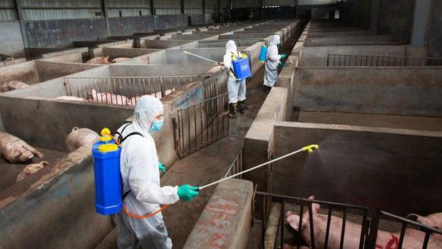Chuyên gia Trung Quốc cảnh báo virus cúm lợn G4 có thể gây đại dịch - Ảnh 1.