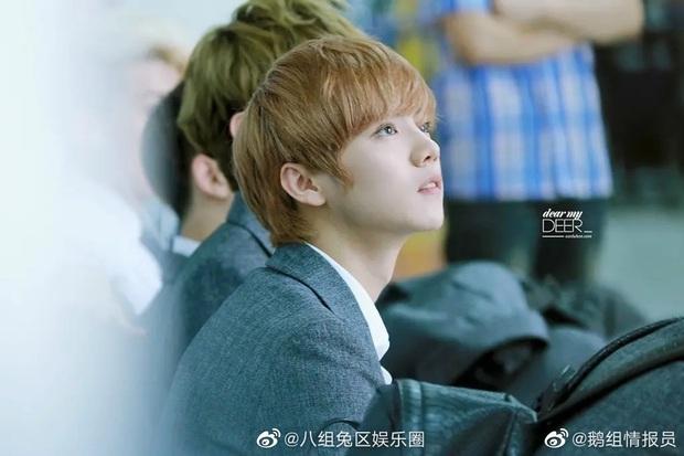 Ảnh mới của Luhan chứng kiến màn xuống cấp nhan sắc ngỡ ngàng, visual của EXO nay còn đâu - Ảnh 7.