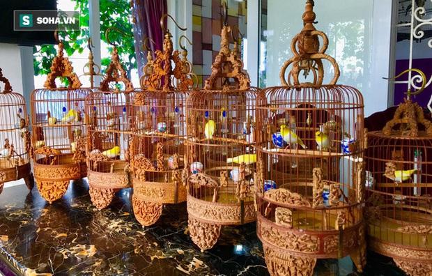 Độc nhất tại Việt Nam: 72 con chim quý tộc trị giá 10 tỷ đồng, có 2 bảo mẫu riêng chăm sóc - Ảnh 6.