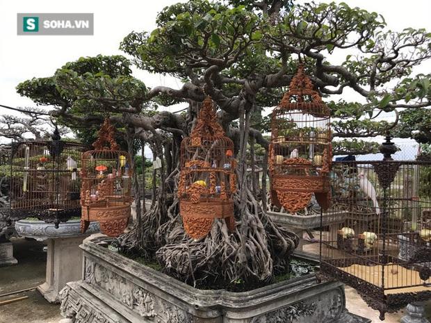 Độc nhất tại Việt Nam: 72 con chim quý tộc trị giá 10 tỷ đồng, có 2 bảo mẫu riêng chăm sóc - Ảnh 7.