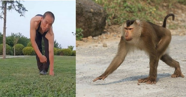 Người khỉ đi bằng 4 chân, đu cây thuần thục suốt 3 thập kỉ qua khiến không ít người hiếu kỳ, tiết lộ cảm hứng đến từ năm mới 20 tuổi - Ảnh 1.