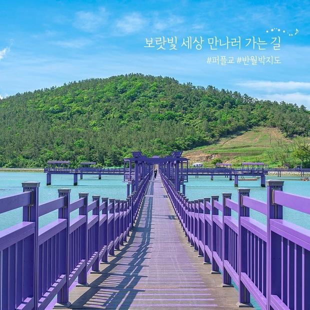 """Một hòn đảo kỳ lạ vừa xuất hiện ở Hàn Quốc đã tạo cơn bão check-in trên MXH: Tất cả mọi thứ đều nhuốm màu """"tím lịm tìm sim"""" - Ảnh 16."""
