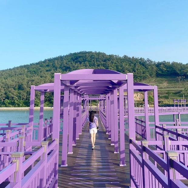 """Một hòn đảo kỳ lạ vừa xuất hiện ở Hàn Quốc đã tạo cơn bão check-in trên MXH: Tất cả mọi thứ đều nhuốm màu """"tím lịm tìm sim"""" - Ảnh 15."""