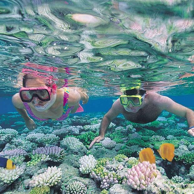 Nghe nói vịnh san hô ở Nha Trang đẹp lắm, mà nay chỉ cần chưa đến 1 triệu đồng/người là có thể tản bộ thảnh thơi ngắm đáy đại dương kỳ bí rồi - Ảnh 1.