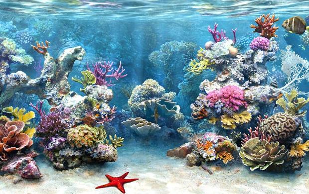 Nghe nói vịnh san hô ở Nha Trang đẹp lắm, mà nay chỉ cần chưa đến 1 triệu đồng/người là có thể tản bộ thảnh thơi ngắm đáy đại dương kỳ bí rồi - Ảnh 2.