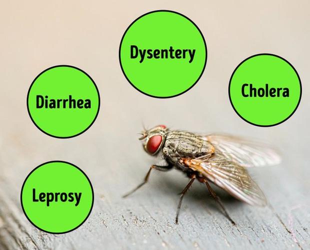 Chuyện gì thực sự xảy ra khi một con ruồi đậu lên miếng bánh của bạn? Tin tôi đi, bạn sẽ muốn vứt nó luôn đấy - Ảnh 4.