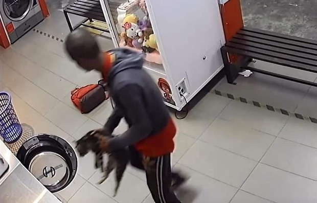 Phát hiện xác 3 con mèo trong máy giặt công cộng, camera soi ra hành động vô nhân đạo của gã đàn ông và cái giá phải trả thích đáng - Ảnh 1.