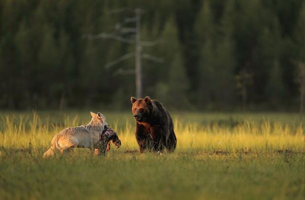 Chuyện tình vụng trộm của nàng sói xám và chàng gấu nâu: Quấn quýt từ 8 giờ tối tới 4 giờ sáng mỗi ngày rồi ai về nhà nấy - Ảnh 6.