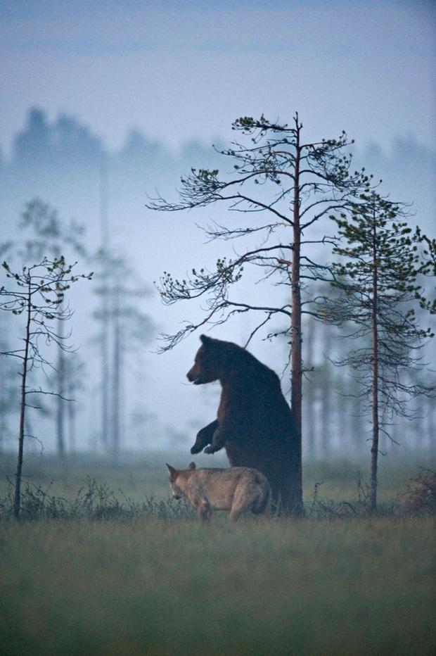Chuyện tình vụng trộm của nàng sói xám và chàng gấu nâu: Quấn quýt từ 8 giờ tối tới 4 giờ sáng mỗi ngày rồi ai về nhà nấy - Ảnh 8.