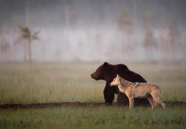 Chuyện tình vụng trộm của nàng sói xám và chàng gấu nâu: Quấn quýt từ 8 giờ tối tới 4 giờ sáng mỗi ngày rồi ai về nhà nấy - Ảnh 10.