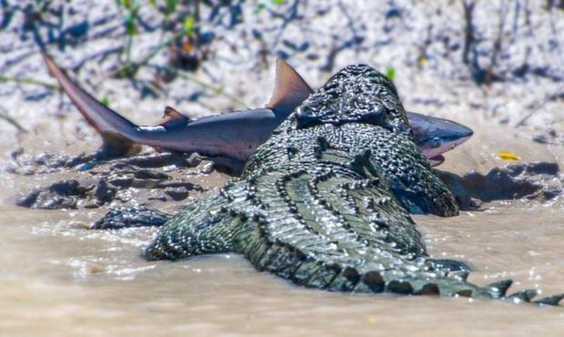 18 bức ảnh chứng minh thiên nhiên nước Úc là cả một thế giới đáng sợ đến rợn người - Ảnh 15.
