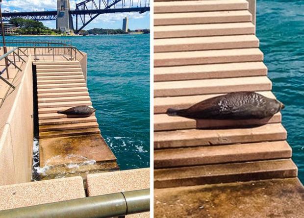 18 bức ảnh chứng minh thiên nhiên nước Úc là cả một thế giới đáng sợ đến rợn người - Ảnh 7.