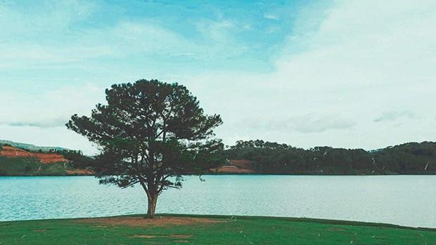 Dân tình đổ xô check-in cây thông mập ú nhất Đà Lạt, chơi vơi giữa mây trời thơ mộng biết bao, nghe đồn khi đi lẻ bóng khi về có đôi! - Ảnh 1.