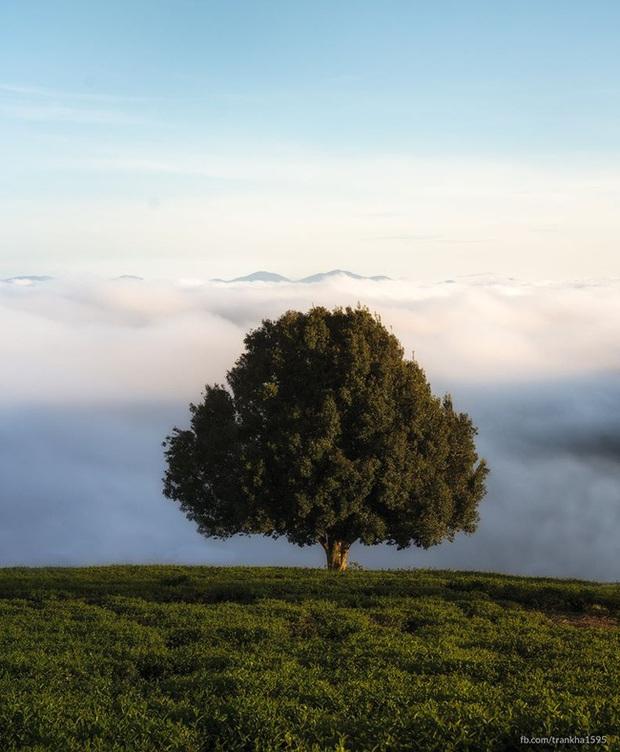 Dân tình đổ xô check-in cây thông mập ú nhất Đà Lạt, chơi vơi giữa mây trời thơ mộng biết bao, nghe đồn khi đi lẻ bóng khi về có đôi! - Ảnh 2.