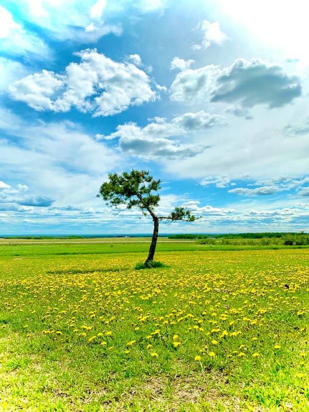 Dân tình đổ xô check-in cây thông mập ú nhất Đà Lạt, chơi vơi giữa mây trời thơ mộng biết bao, nghe đồn khi đi lẻ bóng khi về có đôi! - Ảnh 8.