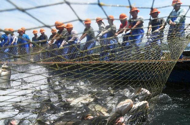 Trung Quốc: Đập thủy điện xả lũ, bội thu 25.000kg cá mè hoa - Ảnh 6.