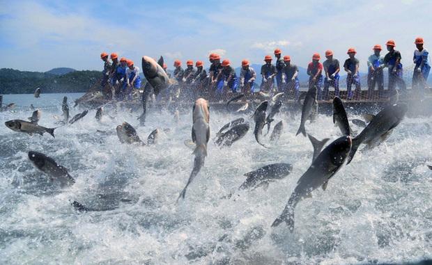 Trung Quốc: Đập thủy điện xả lũ, bội thu 25.000kg cá mè hoa - Ảnh 7.