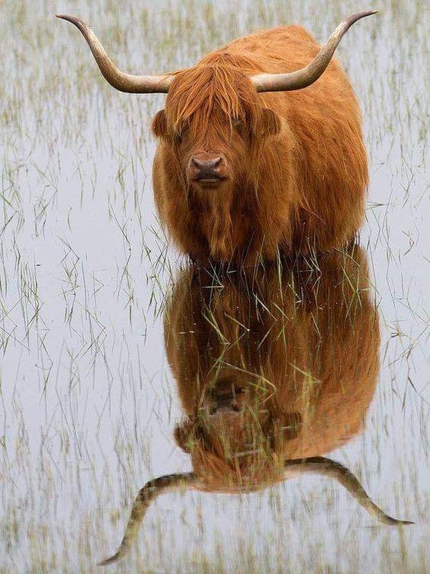 Những cặp sừng động vật nhìn còn buồn hơn bị tiểu tam cắm lên đầu  - Ảnh 19.