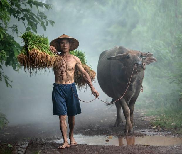 Cùng ngắm loạt hình ảnh đẹp nhất về đa dạng văn hóa, đại diện Việt Nam nổi bật với trâu đồng lúa nước quá đỗi thân thuộc - Ảnh 1.