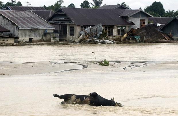 Lũ lụt gây thiệt hại nghiêm trọng tại Indonesia, ít nhất 36 người thiệt mạng - Ảnh 1.