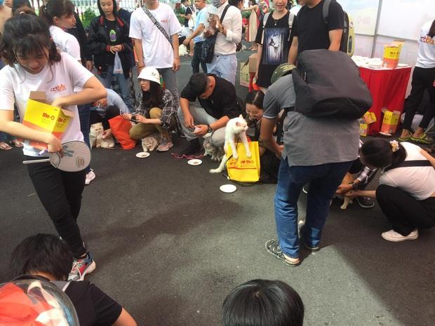 Loạt biểu cảm đang yên đang lành bị má dẫn đi nhà trẻ của các hoàng thượng ở Ngày hội thú cưng Cần Thơ - Ảnh 10.