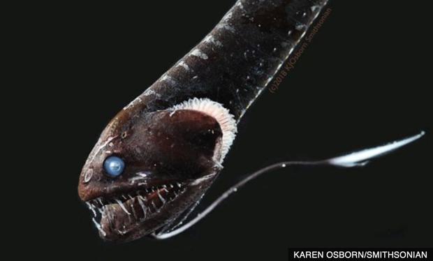 Giải mã bí ẩn: Loài cá đen bậc nhất hành tinh, vẻ ngoài tăm tối đến mức không thể chụp ảnh cuối cùng đã có thể giải thích - Ảnh 2.