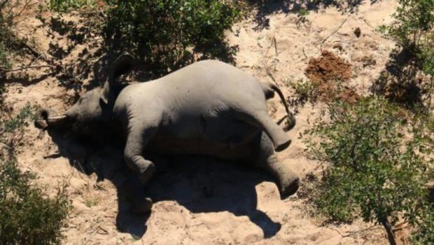Hàng trăm con voi gục chết bí ẩn, thảm họa bảo tồn chưa từng thấy khiến khoa học hoảng loạn không hiểu tại sao - Ảnh 4.