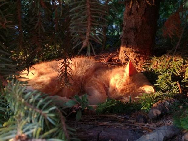 Bộ ảnh chứng minh nếu ngủ trên cây là nghệ thuật, thì bọn mèo là những nghệ sĩ đích thực - Ảnh 2.