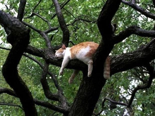 Bộ ảnh chứng minh nếu ngủ trên cây là nghệ thuật, thì bọn mèo là những nghệ sĩ đích thực - Ảnh 4.