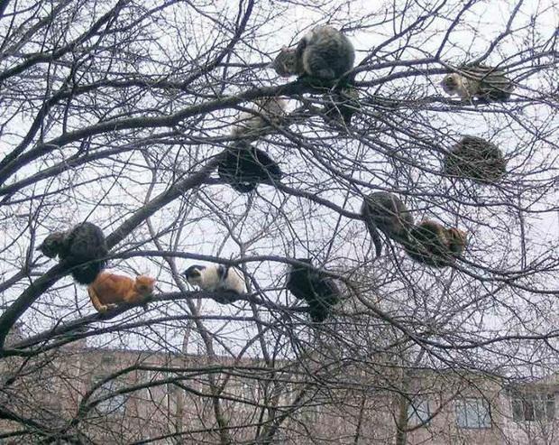 Bộ ảnh chứng minh nếu ngủ trên cây là nghệ thuật, thì bọn mèo là những nghệ sĩ đích thực - Ảnh 5.