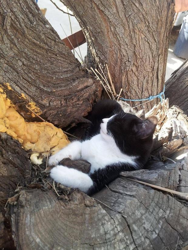Bộ ảnh chứng minh nếu ngủ trên cây là nghệ thuật, thì bọn mèo là những nghệ sĩ đích thực - Ảnh 7.