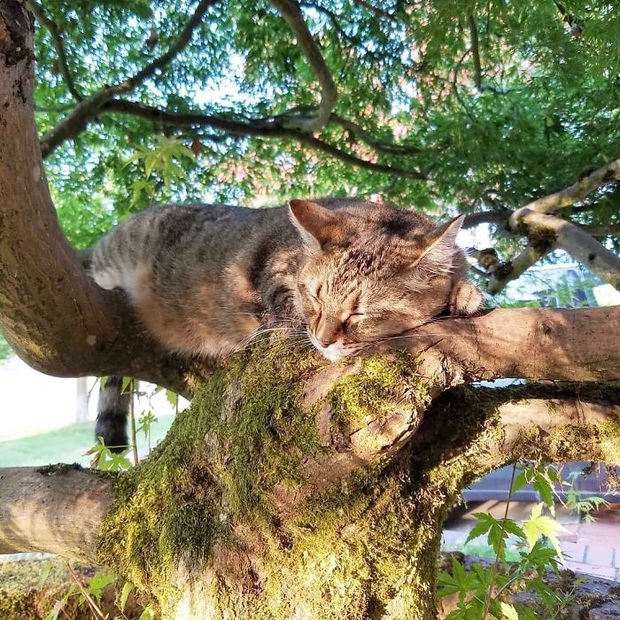 Bộ ảnh chứng minh nếu ngủ trên cây là nghệ thuật, thì bọn mèo là những nghệ sĩ đích thực - Ảnh 8.