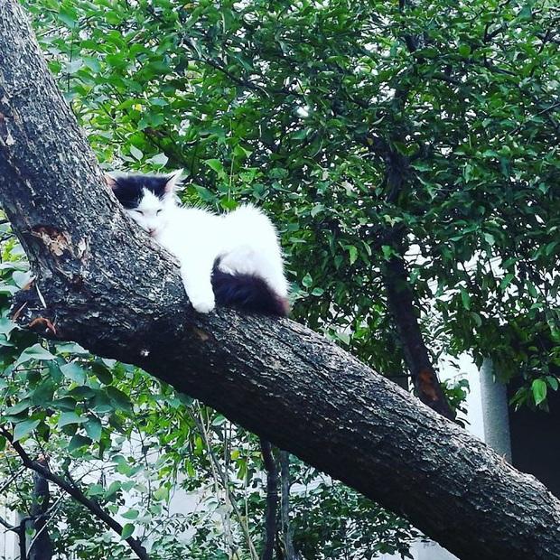 Bộ ảnh chứng minh nếu ngủ trên cây là nghệ thuật, thì bọn mèo là những nghệ sĩ đích thực - Ảnh 9.