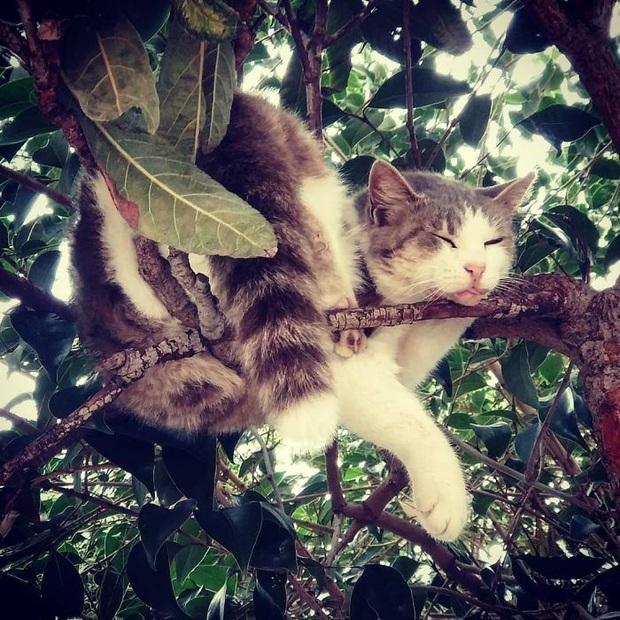 Bộ ảnh chứng minh nếu ngủ trên cây là nghệ thuật, thì bọn mèo là những nghệ sĩ đích thực - Ảnh 11.