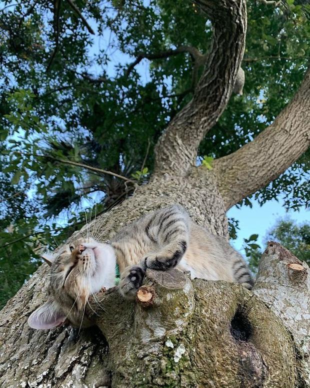 Bộ ảnh chứng minh nếu ngủ trên cây là nghệ thuật, thì bọn mèo là những nghệ sĩ đích thực - Ảnh 12.