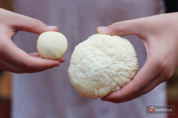 """Mộng dừa - món ăn tuổi thơ của người Việt từng bị """"độn"""" giá lên tới 300k/kg vì quá hiếm, nếu mua cái càng to thì… càng dở - Ảnh 2."""