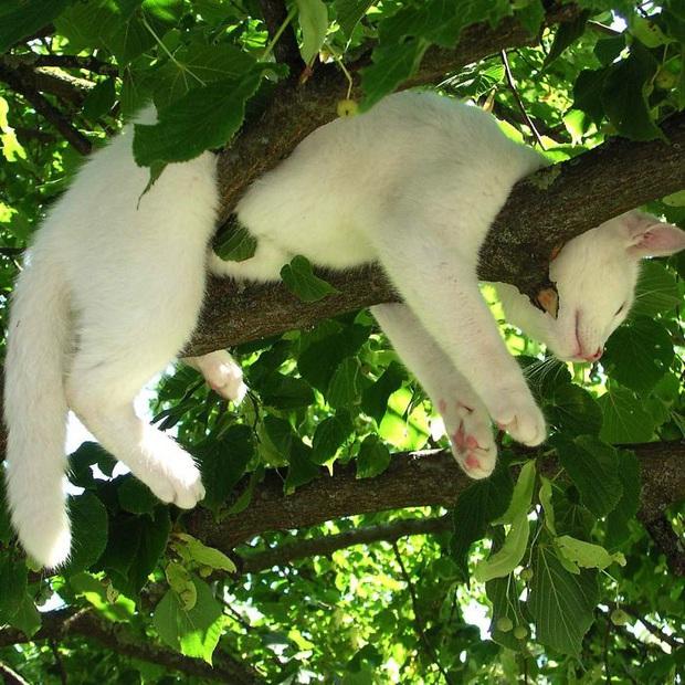 Bộ ảnh chứng minh nếu ngủ trên cây là nghệ thuật, thì bọn mèo là những nghệ sĩ đích thực - Ảnh 14.