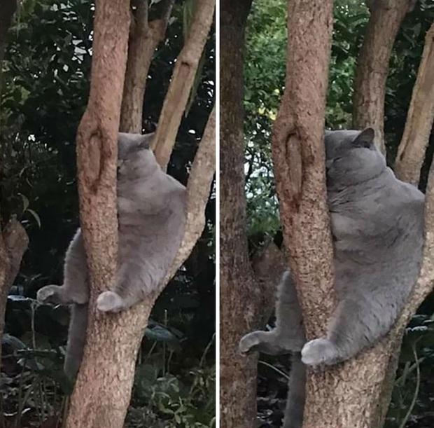 Bộ ảnh chứng minh nếu ngủ trên cây là nghệ thuật, thì bọn mèo là những nghệ sĩ đích thực - Ảnh 15.