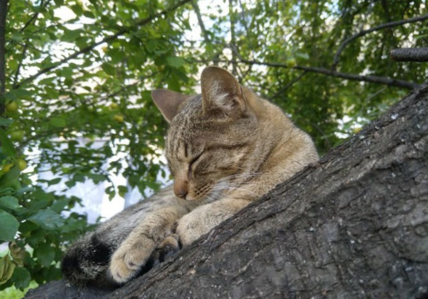 Bộ ảnh chứng minh nếu ngủ trên cây là nghệ thuật, thì bọn mèo là những nghệ sĩ đích thực - Ảnh 16.