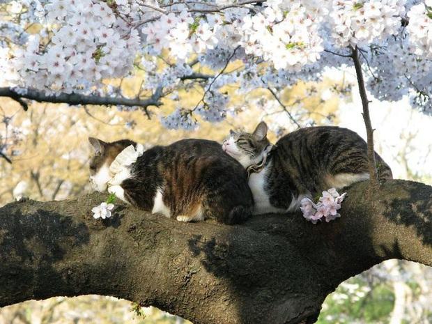 Bộ ảnh chứng minh nếu ngủ trên cây là nghệ thuật, thì bọn mèo là những nghệ sĩ đích thực - Ảnh 18.